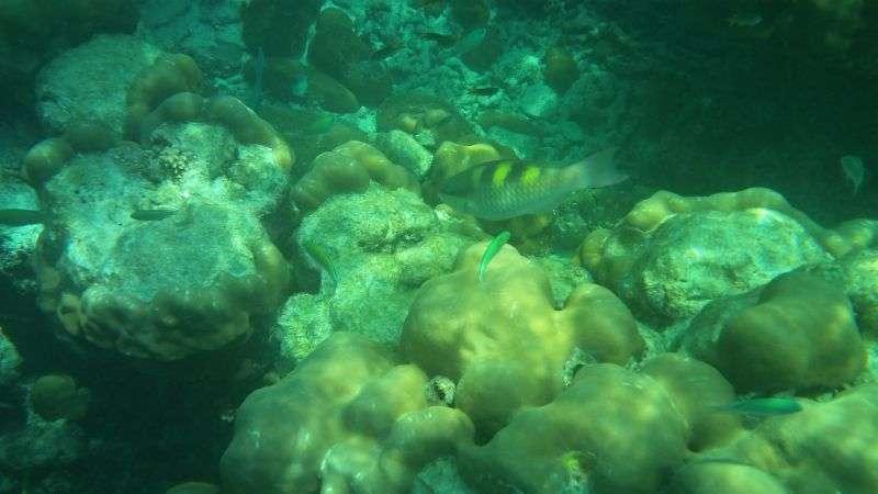 Surin Island 9