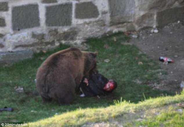 Oso ataca a un oso